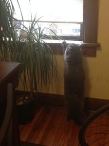 kittyencounter1
